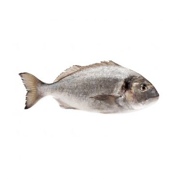 Black Sea Bream Cleaned & Gutted 520-720g