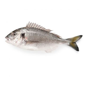Organic Sea Bream cleaned & Gutted 300-500g