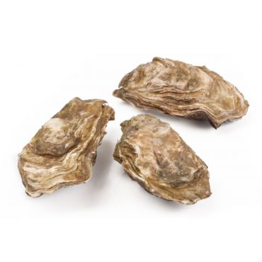 Special Marenne Oleron No.2 Oysters 12 Pcs/Box