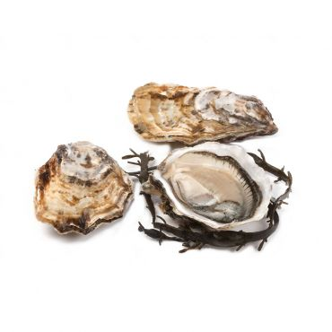 Tarbouriech Oyster Special No. 2 48 Pcs/Box