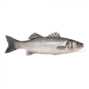 Sea Bass Cleaned & Gutted Line Caught 1-2kg