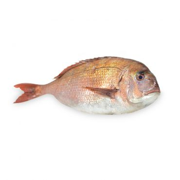 Farmed Tai Sea Bream Cleaned & Gutted 900-1350g