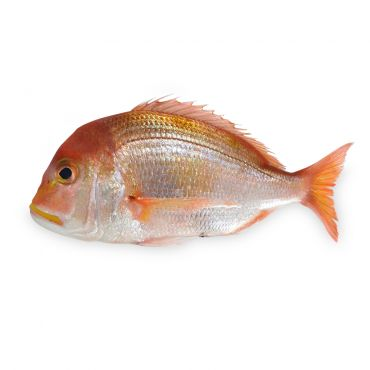 Yellowback Sea Bream Cleaned & Gutted 360-540g