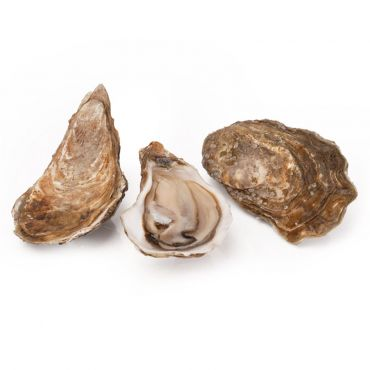 Special Marenne Oleron No.3 Oysters 12 Pcs/Box